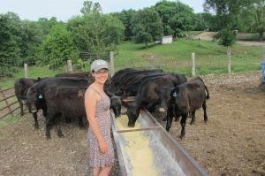 me w beef calves